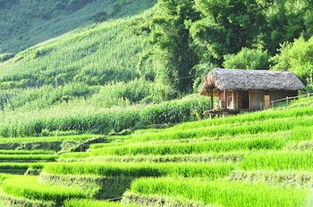 ECO PALMS HOUSE - Vietnam - Sapa